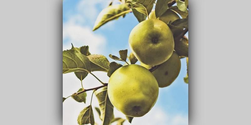 Soczyste jabłka
